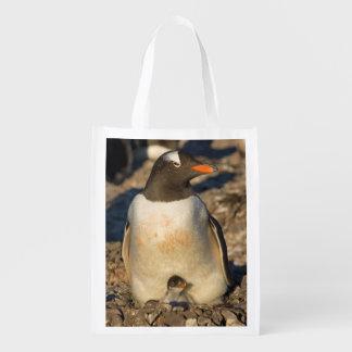 gentoo penguin, Pygoscelis papua, with newborn Reusable Grocery Bag