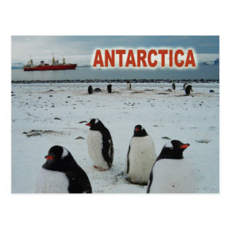 Gentoo Penguins, Antarctic Peninsula Postcard