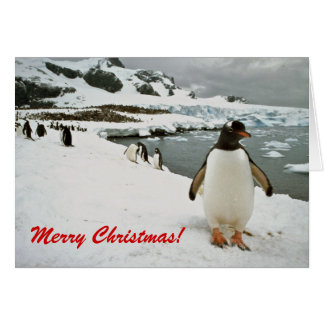 Gentoo Penguins in Antarctica Christmas Card