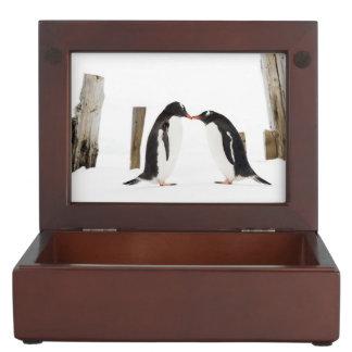 Gentoo Penguins Kissing gift box