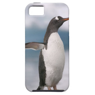 Gentoo penguins on rocky shoreline with backdrop iPhone 5 cases