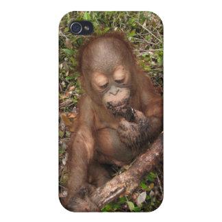 George Baru Orangutan Covers For iPhone 4