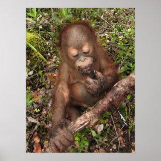 George  Orangutan Dirty Mouth Poster