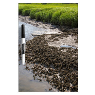 Georgia Mussel Beds and Green Grasslands Dry Erase Boards