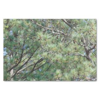 Georgia Pine Tree Branches 074 Tissue Paper