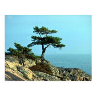 Georgian Bay Shoreline, Lake Huron, Ontario, Canad Postcard