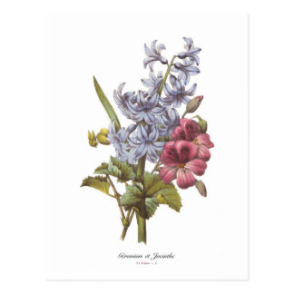 Geranium and Hyacinth Postcard
