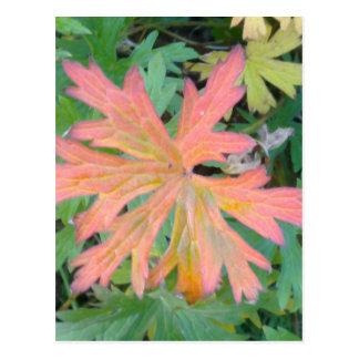 Geranium Leaf Postcard