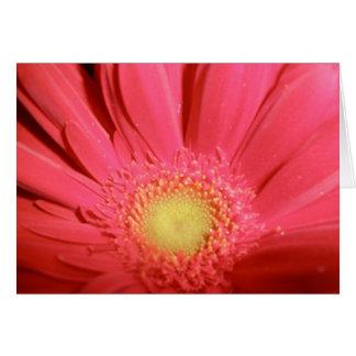 Gerber Daisy Card -Blank Inside