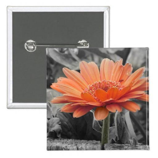 Gerber Daisy Color Splash Country Cute Pinback Button