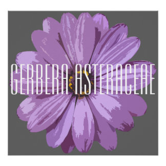 Gerbera Asteraceae - Canvas Poster