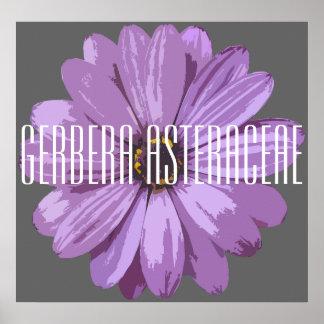 Gerbera Asteraceae - Poster (Matte)