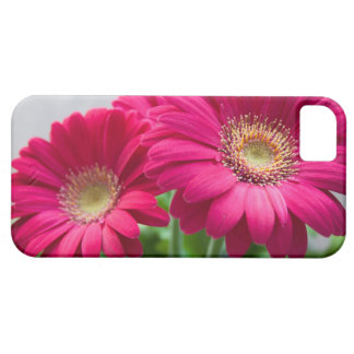 gerbera case for the iPhone 5