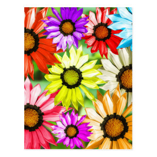 Gerbera colourful flowers postcard