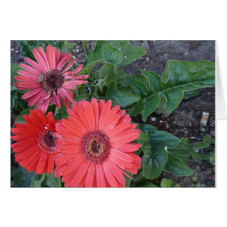 Gerbera Daisies Get Well Card
