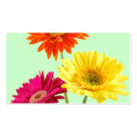 Gerbera Daisies Pack Of Standard Business Cards