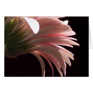 gerbera daisy card
