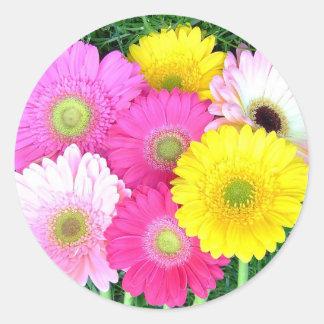 Gerbera Daisy Colors Classic Round Sticker