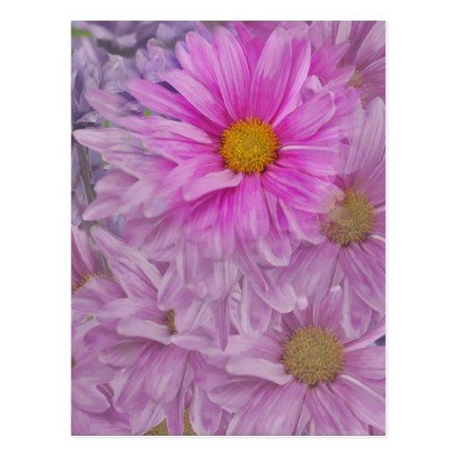 Gerbera Daisy Floral Postcard
