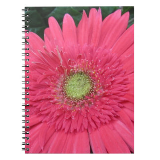 Gerbera Daisy Notebooks
