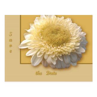 Gerbera Daisy Postcard