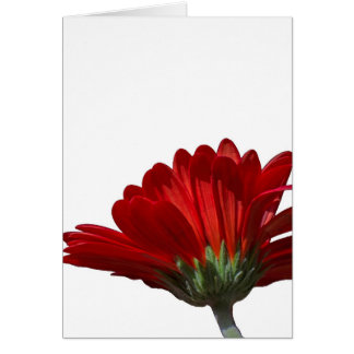 Gerbera Daisy Red Flower Greeting Card
