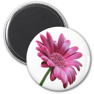 Gerbera Daisy Round Magnet