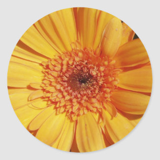 Gerbera Daisy Stickers