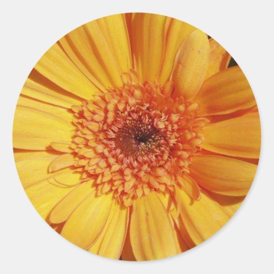 Gerbera Daisy Stickers