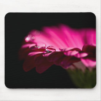 Gerbera Daisy With Drop of Water on a Petal Mouse Pad