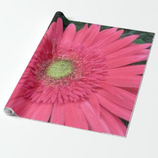 Gerbera Daisy Wrapping Paper