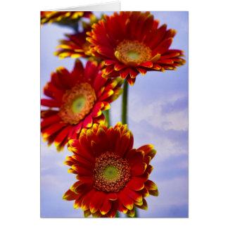 Gerbera flower card