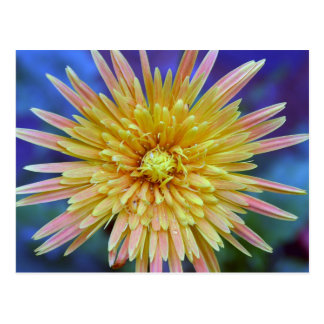Gerbera flower postcard