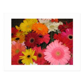 Gerbera flowers post card