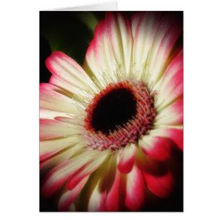 Gerbera Glow - Daisy Card