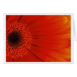 Gerbera - Orange Card