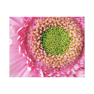 Gerbera rose impressions sur toile