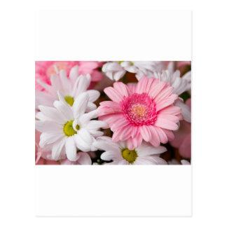 Gerberas & Chrysanthemums Postcard