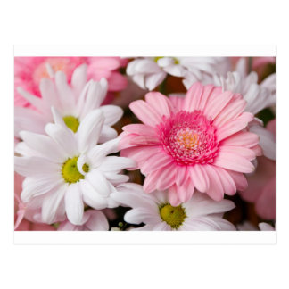 Gerberas & Chrysanthemums Postcards