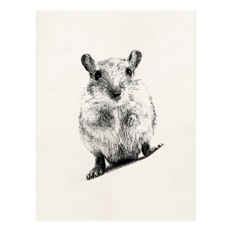 Gerbil Baby Animal Illustration Pet Gerbils Postcard