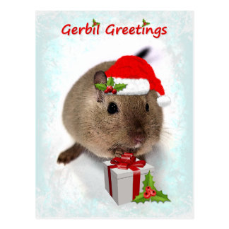 Gerbil Greetings Postcard