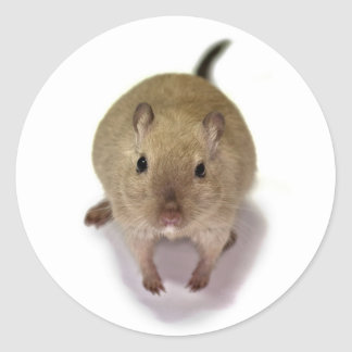 Gerbil Sticker