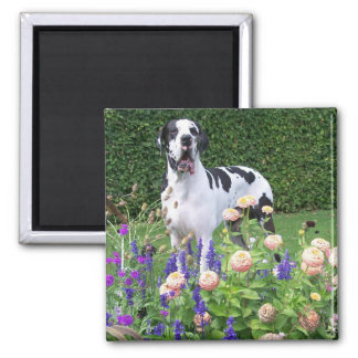 German Dogge, great dane, Hunde, Dogue Allemand Magnet