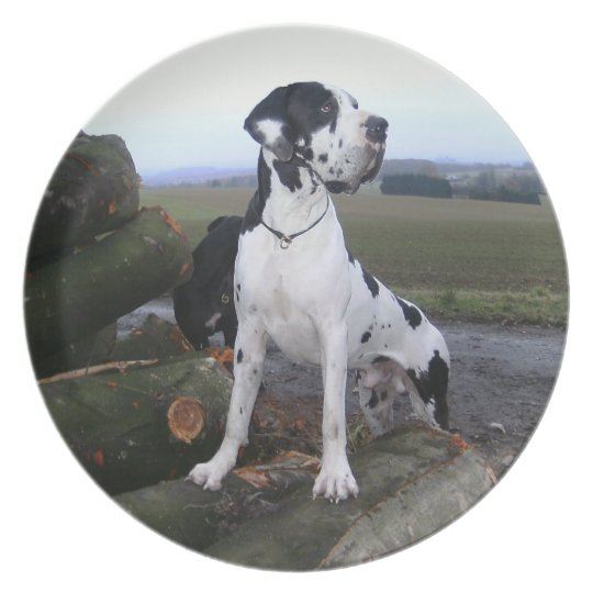 German Dogge, great dane, Hunde, Dogue Allemand Plate