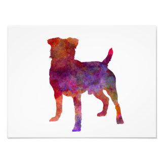 German Hunting Terrier in watercolor Photo Print