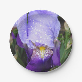 German Iris With Some Raindrops Paper Plate