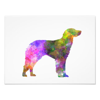 German Longhaired Pointer in watercolor Photo Print