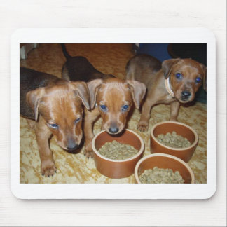 german Pinscher_puppies Mouse Pad