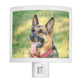 German Shepard Night Light