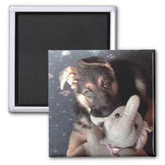 German Shephard Puppy Magnet